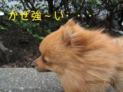 風上こっちね