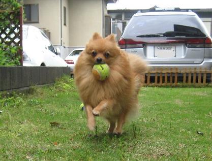 ボール遊びは楽しいな