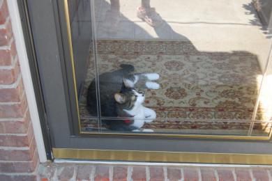 玄関のガラスドア
