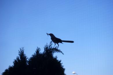 なんていう鳥なんだろう・・・