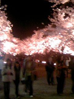 桜ロード080409_1858~01