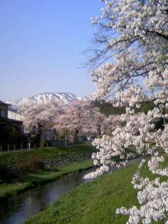 青田川と南葉山