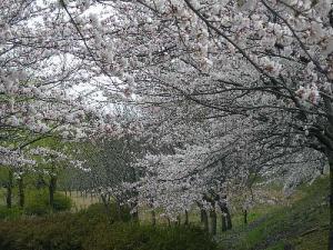 2008-004-byakoyama.jpg