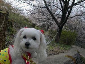 2008-017-kofun.jpg