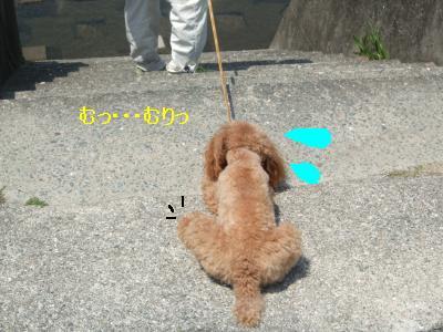 DSCF2645_convert_20080429062351.jpg