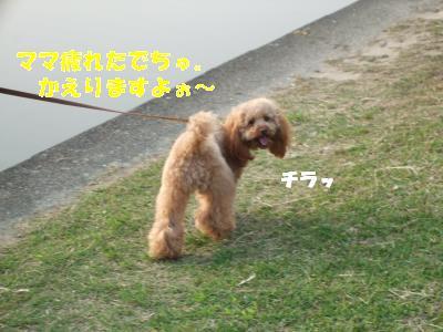 DSCF2883_convert_20080508093223.jpg