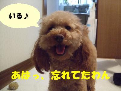 DSCF2900_convert_20080510085657_20080510092510.jpg