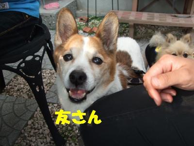 DSCF3100_convert_20080519233707.jpg