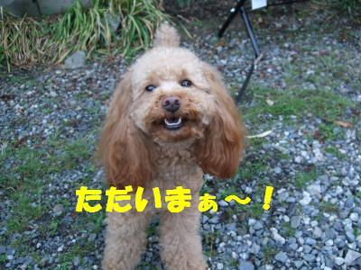 DSCF3186_convert_20080527110430.jpg