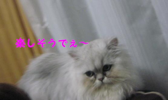 IMG_2887.jpg