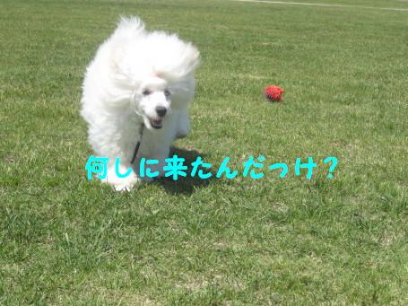 IMG_3086.jpg