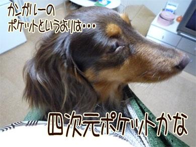 dora_20080606212058.jpg