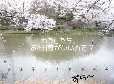 kamozura.jpg