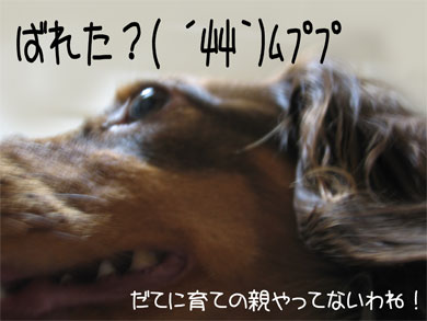 kusu_20080530201143.jpg