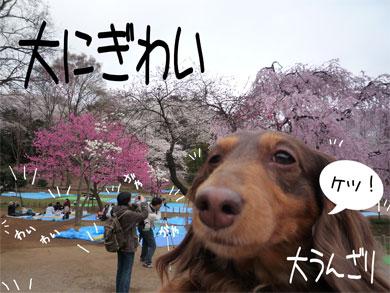 oonigiwai.jpg