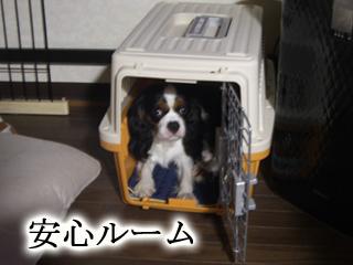 CIMG2246.jpg