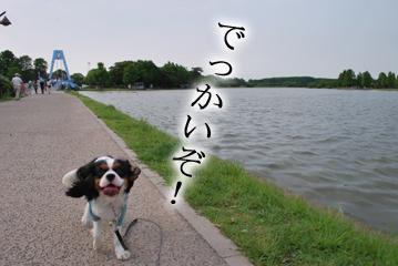 DSC_0016_085.jpg