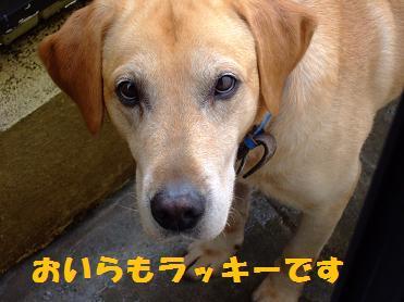2006_060101.jpg