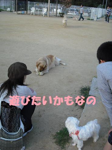 2008_0427ドッグラン20128