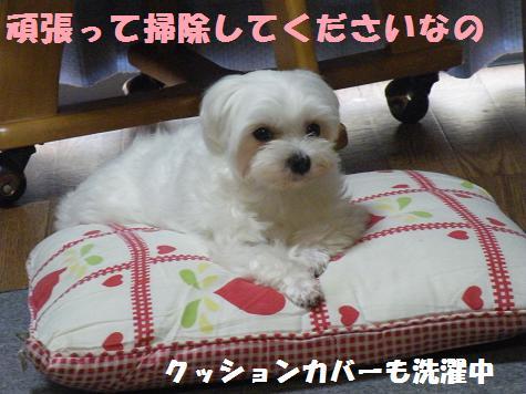 2008_007030090.jpg