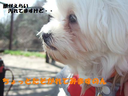 2008_031510.jpg