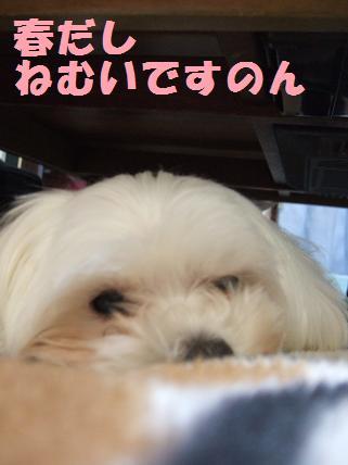 2008_0320.jpg