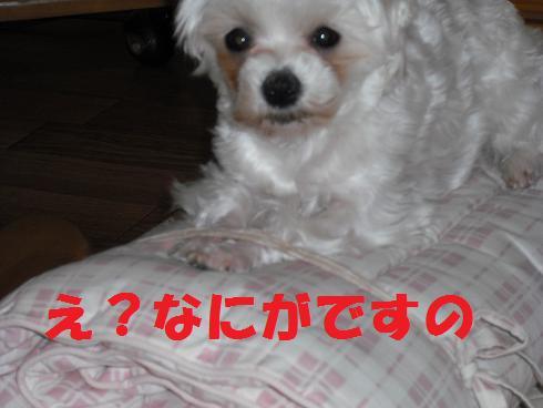 2008_04010003.jpg