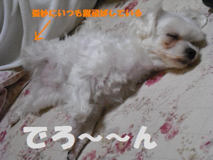 2008_04010077.jpg