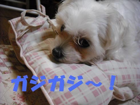 2008_04010116.jpg