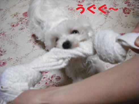 2008_04030040.jpg
