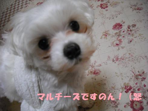 2008_04030047.jpg