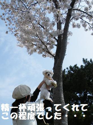 2008_04060007.jpg