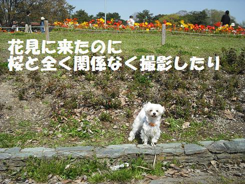 2008_04070013.jpg