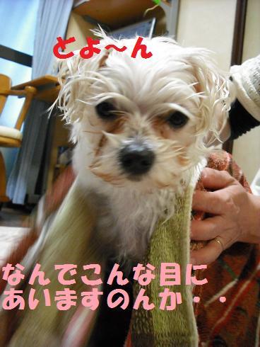 2008_04070014.jpg