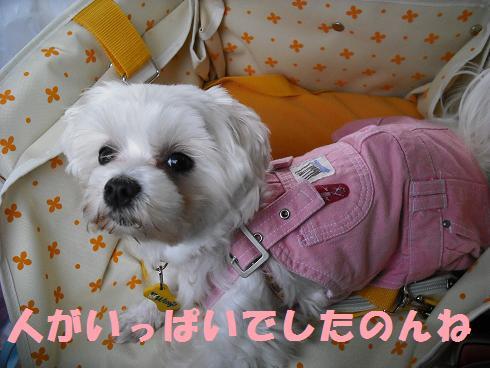 2008_04140036.jpg