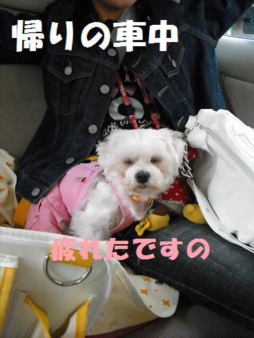 2008_04140038.jpg