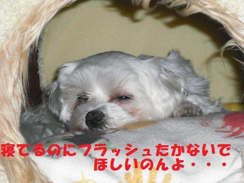 2008_04140048.jpg
