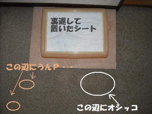 2008_04140057.jpg