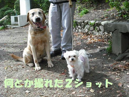 2008_04190029.jpg
