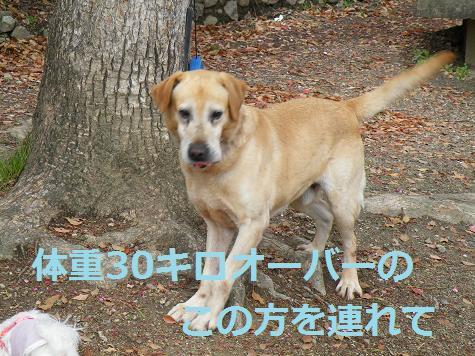 2008_04200011.jpg