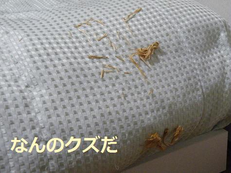 2008_04240001.jpg