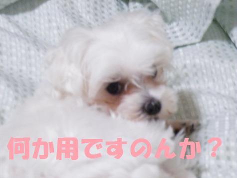 2008_04240008.jpg
