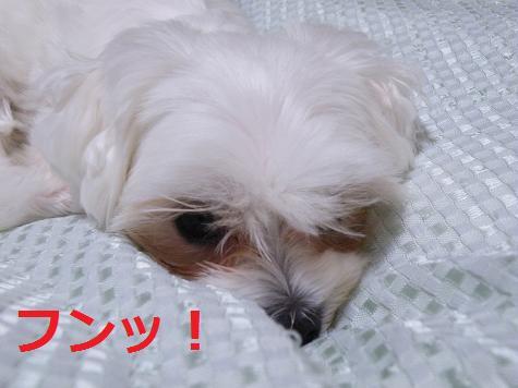 2008_04240011.jpg