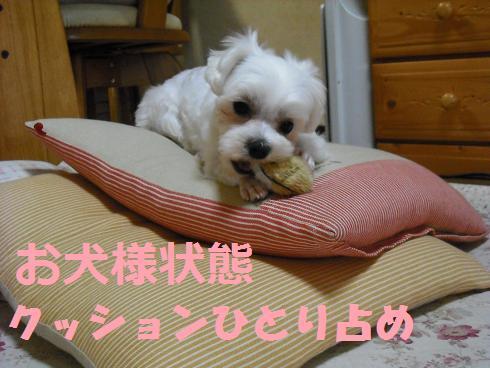 2008_05060001.jpg