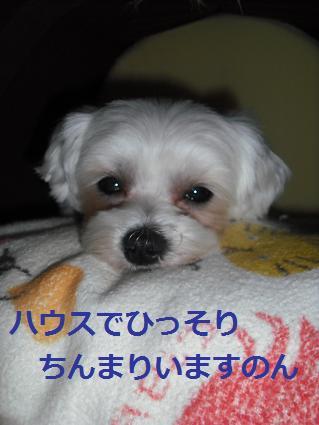 2008_05060015.jpg