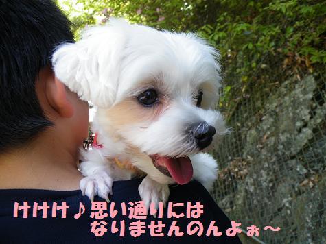 2008_05070016.jpg
