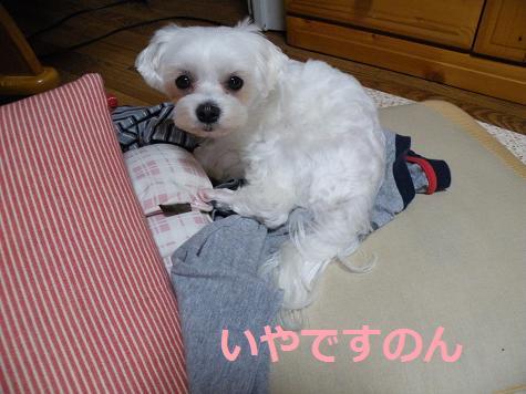 2008_05100015.jpg