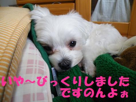 2008_05140052.jpg