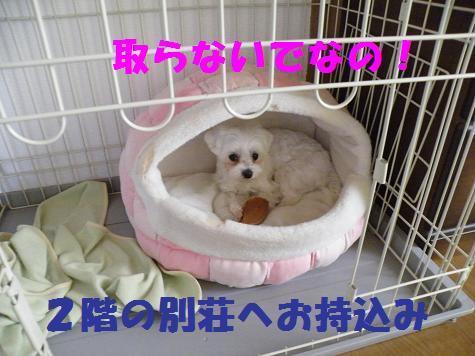 2008_0516000202.jpg