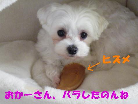 2008_05160003.jpg